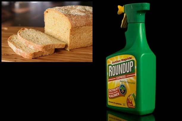 The hidden weed killer in your BREAD: Commercial wheat doused with cancer-causing glyphosate herbicide right before harvest... and you're eating it!