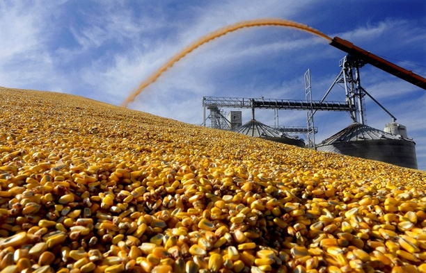 Russia bans import of soybeans, corn from United States from Feb 15