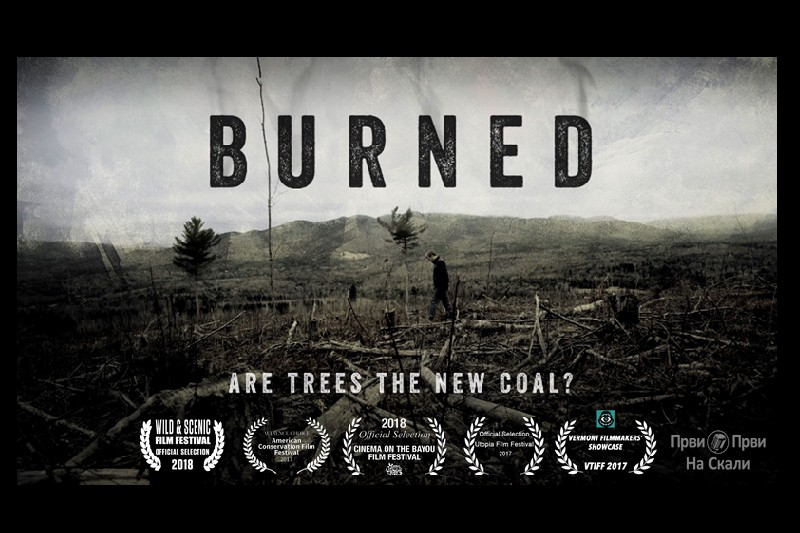Burned: Are Trees the New Coal?